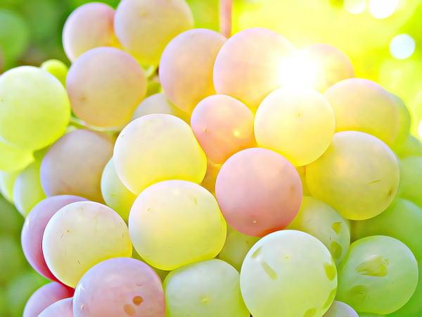 ナーブルスソープ - ぶどう石鹸 - オーガニック 無添加 ポリフェノール ビタミンC 保湿 エイジングケア