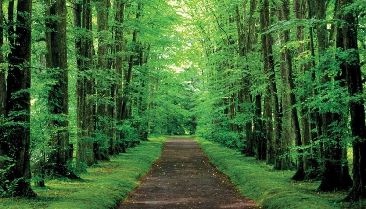 image-forest-japan